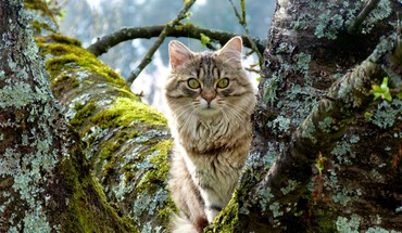 Animaux chats félin chatons nature  HD wallpaper