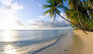 Caribbean tobago beaches palm trees pigeons HD wallpaper