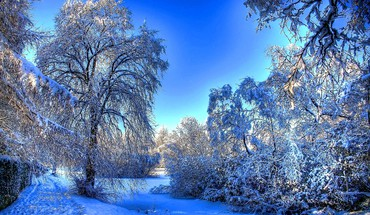 Winter shine HD wallpaper