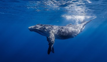photos Whale  HD wallpaper