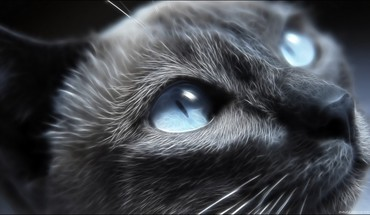 Eyes cats blue animals the cat HD wallpaper
