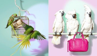 Parrots purses birds HD wallpaper