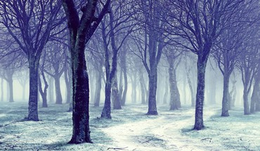 Forests landscapes nature snow trees HD wallpaper