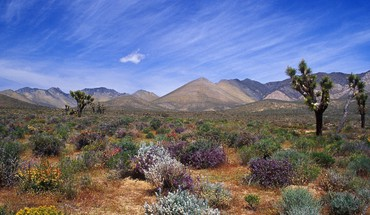 California bloom deserts mountains skyscapes HD wallpaper