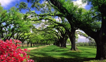 South carolina hall plantation trees HD wallpaper