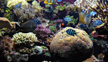 Les poissons d'aquarium  HD wallpaper