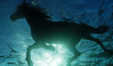 Horses swimming HD wallpaper