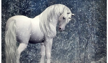 Unicorn in a snowy forest HD wallpaper