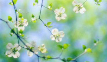 Delicate flowers on the branches HD wallpaper