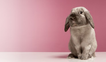 Bunnies nature animals HD wallpaper