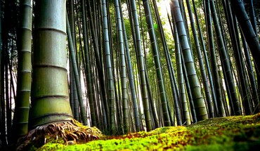 Nature bamboo plants HD wallpaper