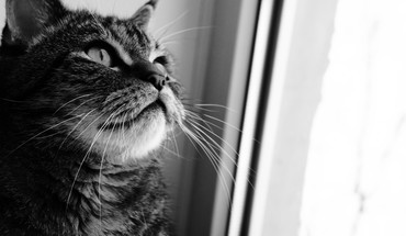 Animals cats monochrome pets HD wallpaper