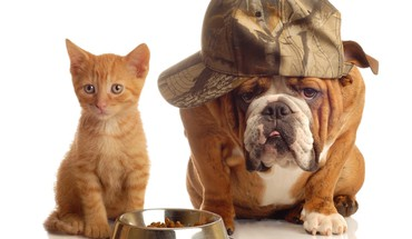 Animals bulldog cats dogs english HD wallpaper