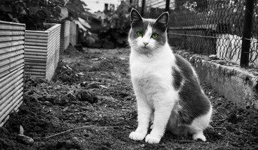 Black and white cats eyes HD wallpaper