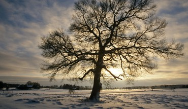 Sweden oak winter HD wallpaper