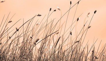 Dry grass HD wallpaper