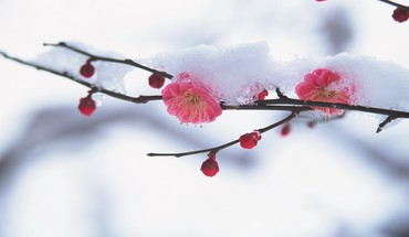 Spring with a dust of snow HD wallpaper