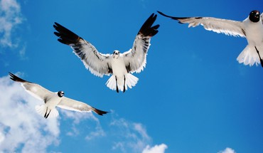 Birds nature skyscapes HD wallpaper