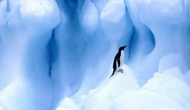 Ice nature birds animals penguins HD wallpaper