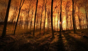 Sunset sunbeams coming through the forest HD wallpaper