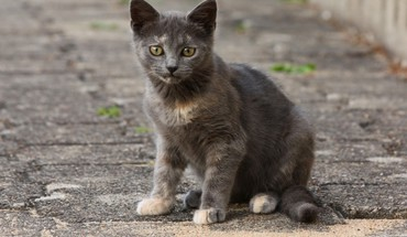 rue Animaux chats HD wallpaper