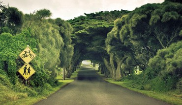 Wonderful tree tunnel HD wallpaper