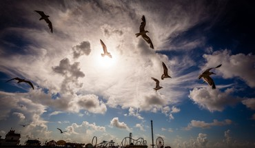 Seagulls near an amusement park on a pier HD wallpaper