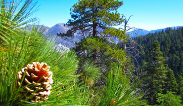 Pine cone and trees on a mountain side HD wallpaper