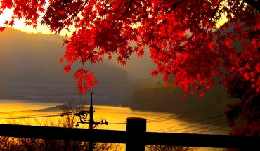 Red autumn leaves at dusk HD wallpaper