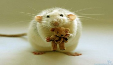 Mouse with teddy bear HD wallpaper
