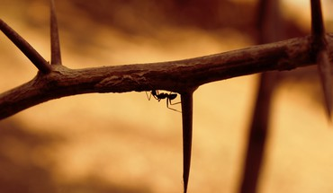 Nature ant HD wallpaper