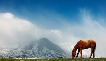 Landscapes animals horses HD wallpaper