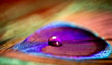 Closeup colors drop feathers macro HD wallpaper