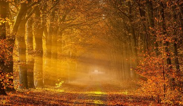 Gold autumn HD wallpaper
