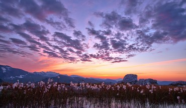 Leftover cotton stalks in a winter sunset HD wallpaper