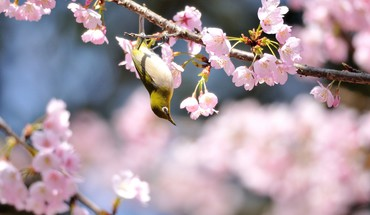 Flowers birds animals HD wallpaper