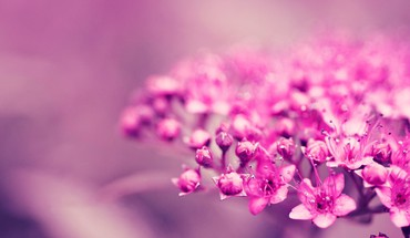 Flowers pink ea blurred background HD wallpaper