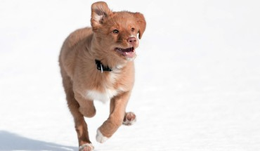 Animals dogs outdoors pets snow HD wallpaper