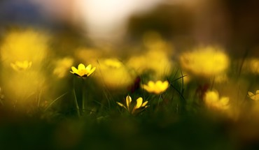 Closeup flowers macro nature yellow HD wallpaper