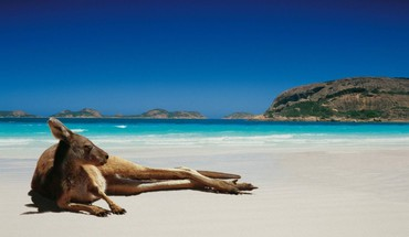 Animals beaches kangaroos landscapes lying down HD wallpaper