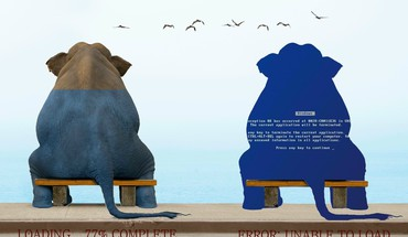 Animals quotes funny elephants HD wallpaper