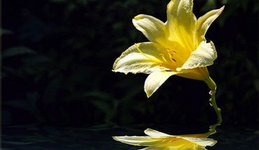 Flower over water pictures HD wallpaper