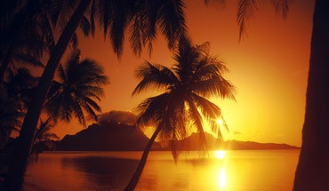 Beaches landscapes nature palm trees sunset HD wallpaper