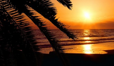 Florida beaches palm trees silhouettes sunset HD wallpaper