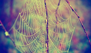 Nature insects web spider webs HD wallpaper