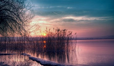 Beautiful lake reeds at sunset HD wallpaper