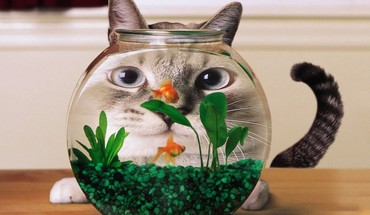 Cat aquarium  HD wallpaper