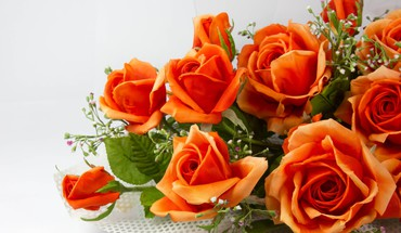 Orange roses HD wallpaper