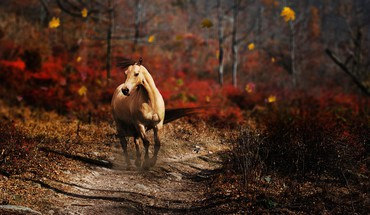 Nature horses HD wallpaper