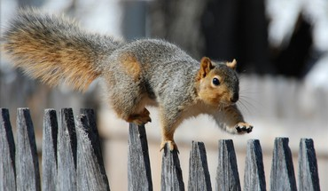 Animals fences nature squirrels HD wallpaper